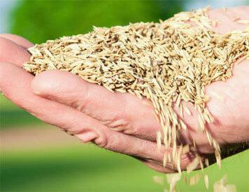grass seeding calgary