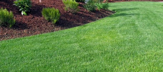 6 Key Ways to Maintain A Healthy Yard
