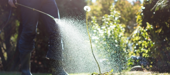 3 Reasons for Weed Control