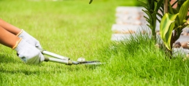 Is there a difference between lawn care services and lawn maintenance?