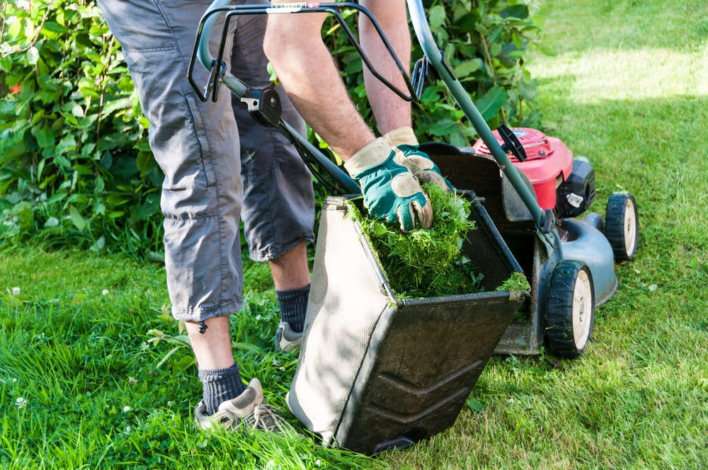 Difference between lawn care services and lawn maintenance explained