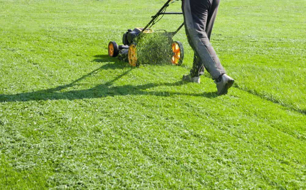 Top 5 tips for selecting a Calgary lawn care professional
