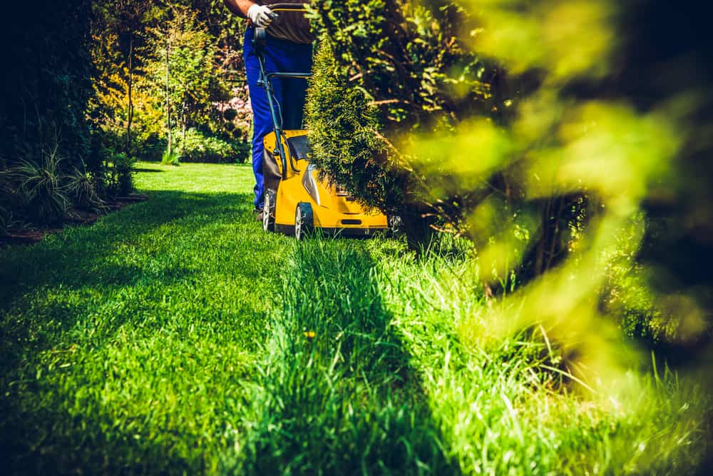 Top 3 vegetation management methods and why they are important