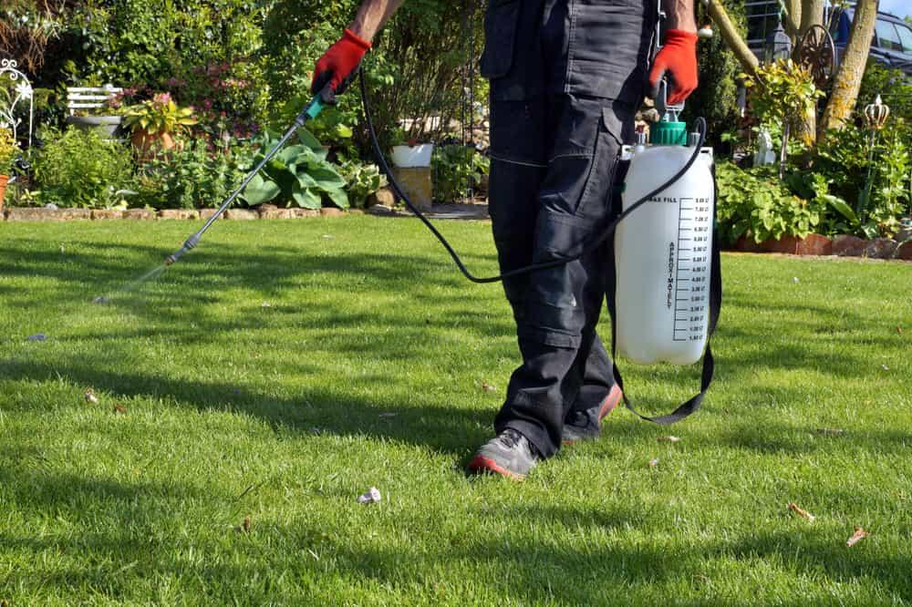 Lawn maintenance Calgary