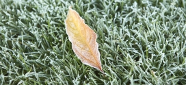 Tips to Prepare Your Lawn for Winter